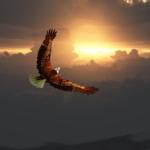 Eagle Medicine
